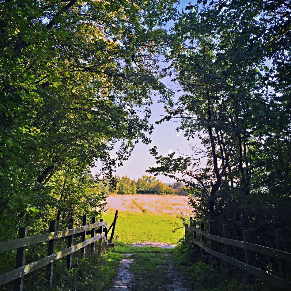 Hicking Walk This Way Walking Around Walking Wood Summer Sunny Day