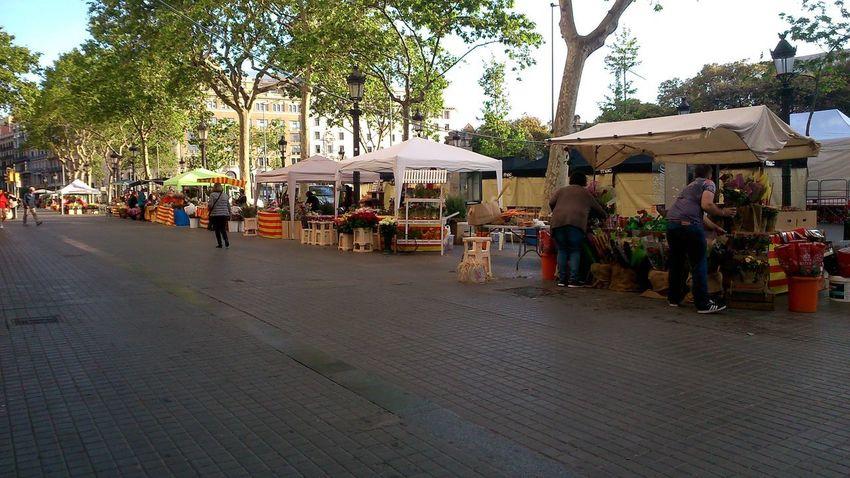 Dia de San Jordin - Sunday - 8 a.m. Roses for Books #barcelona #CATALUNYA #festival #Morning #roses #SanJordi #spain #story #streets #Sunday #wandering
