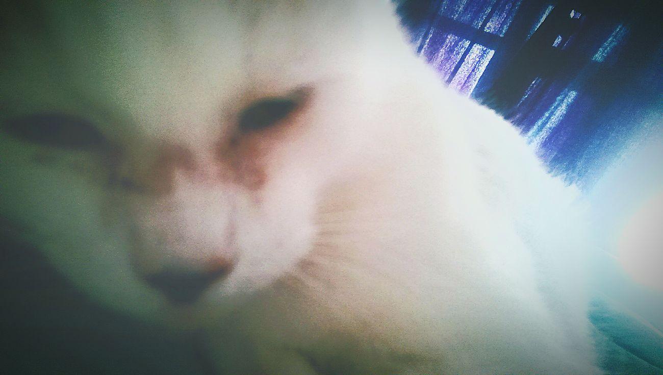 Good Morning Snugglebuddy Kitty Cat