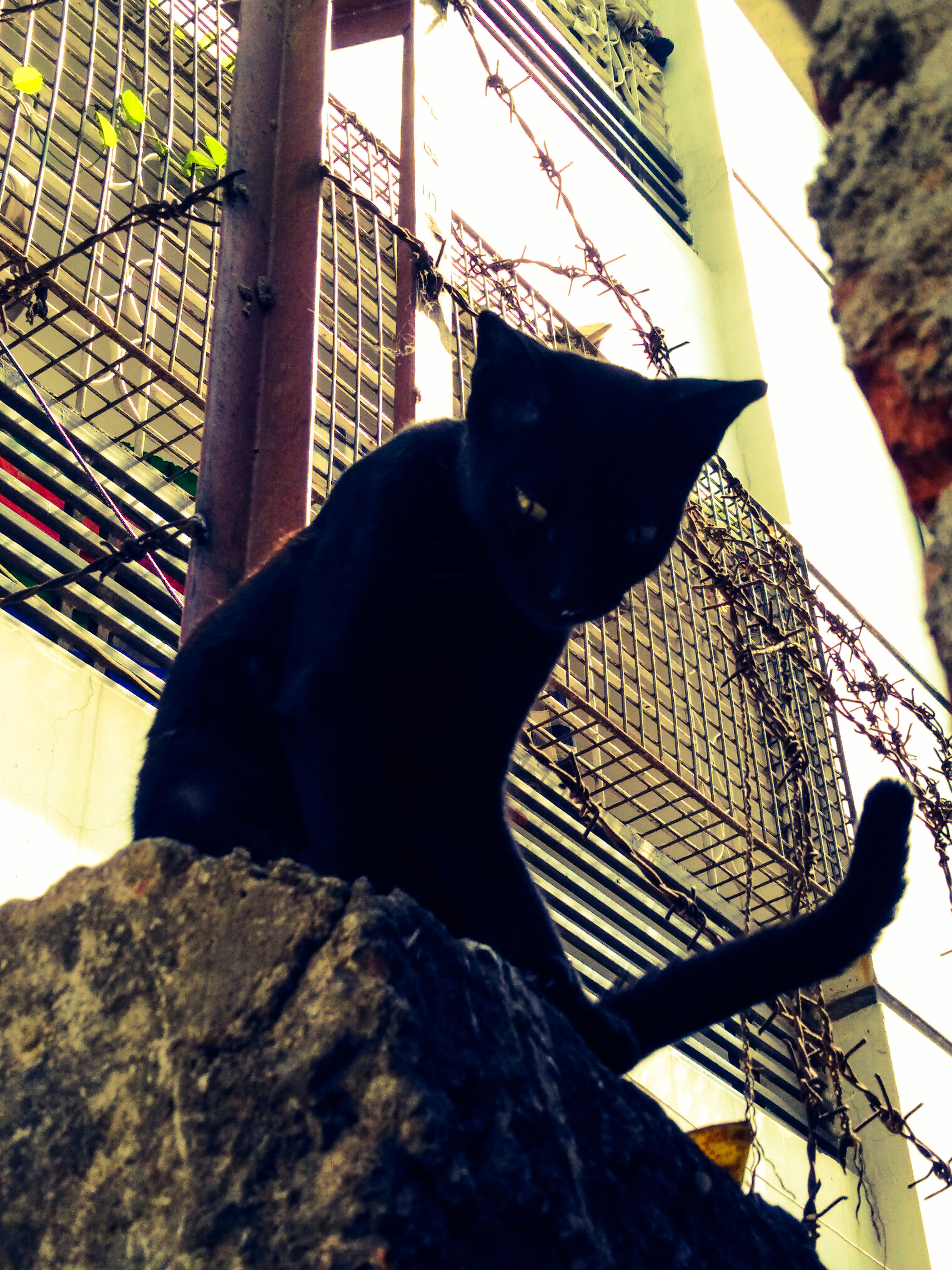 one animal, animal themes, pets, domestic animals, mammal, black color, domestic cat, feline, cat, sitting, relaxation, low angle view, built structure, no people, architecture, close-up, day, black, resting, outdoors