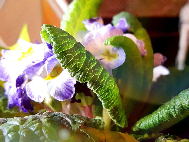 Leaf Flower Nature Fragility Close-up Plant Beauty In Nature No People Growth Day Flower Head Freshness Purple Purple Flower