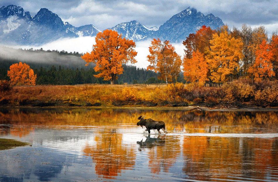 MOOSE MONDAY  EyeEm Nature Lover Fall Colors