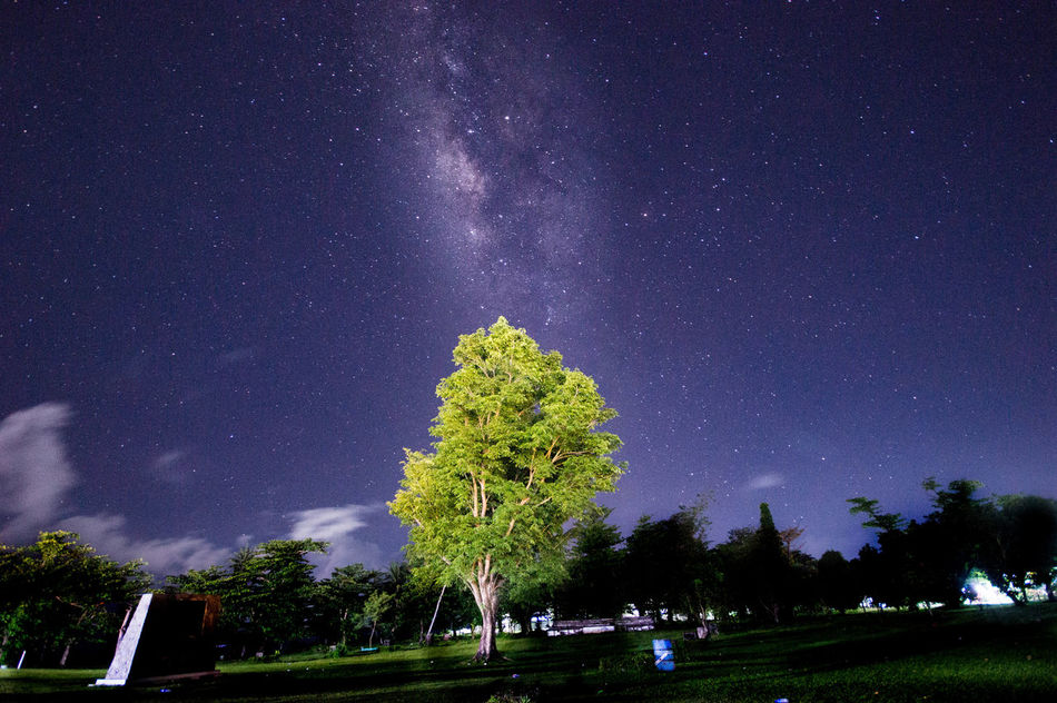 Milkyway Stars Star - Space Astronomy Galaxy Milky Way Beauty In Nature Low Angle View Starry Illuminated Constellation Star Field Sky Night Tree Nature Outdoors Scenics No People Space