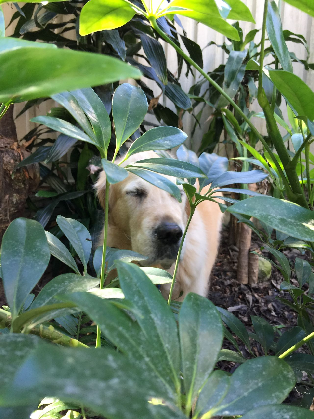 Beautiful stock photos of golden retrievers, Animal Themes, Between, Day, Dog