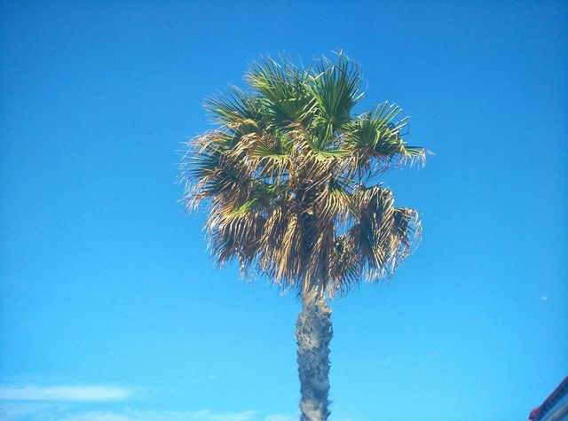 Palm time Palm Tree Tree Summer Palm SPAIN - EyeEm - 웹