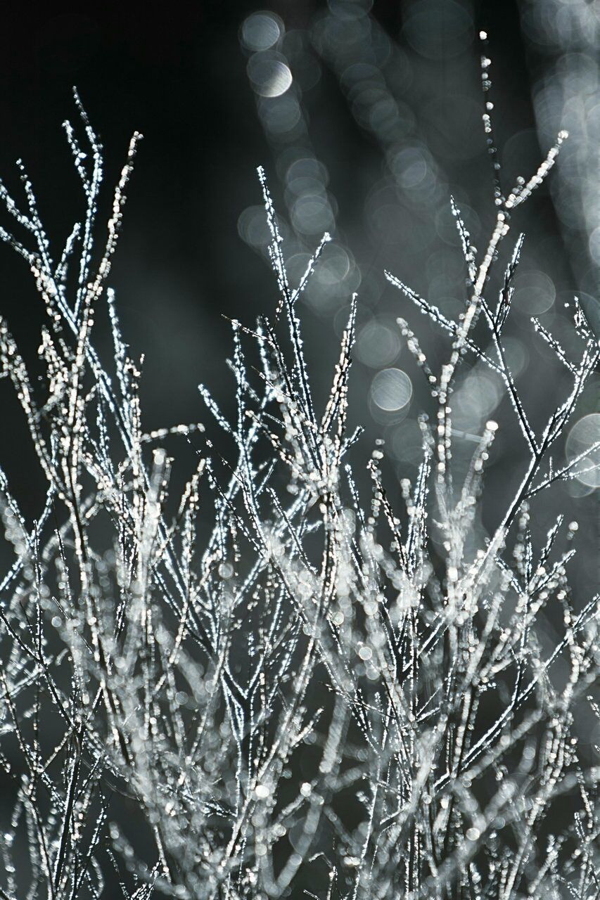 Close-up Of Frosted Plants