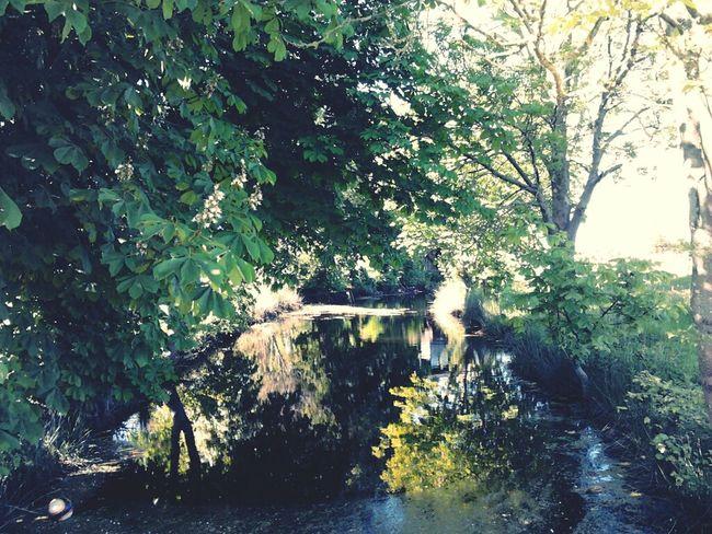 Garden Lake Nature_collection