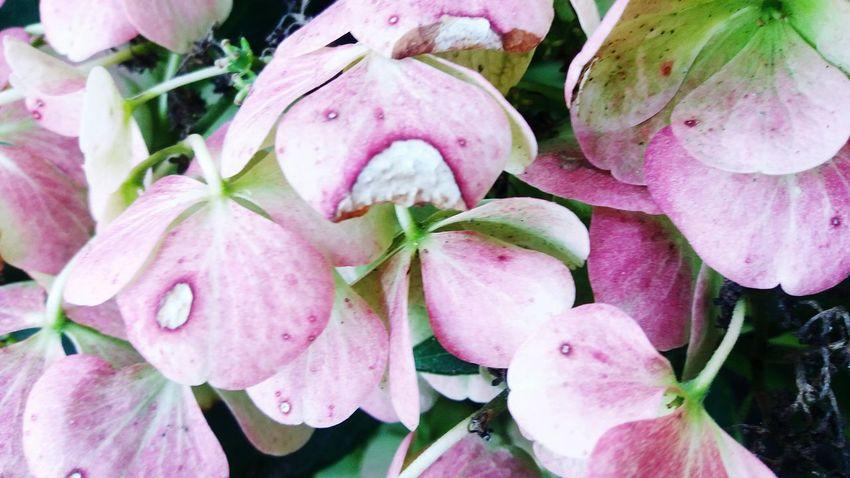 Freshness Close-up Pink Color Leaf Flower Growth Fragility Plant Nature Beauty In Nature Selective Focus Petal Flower Head Vibrant Color Day Botany Abundance Green Springtime Full Frame