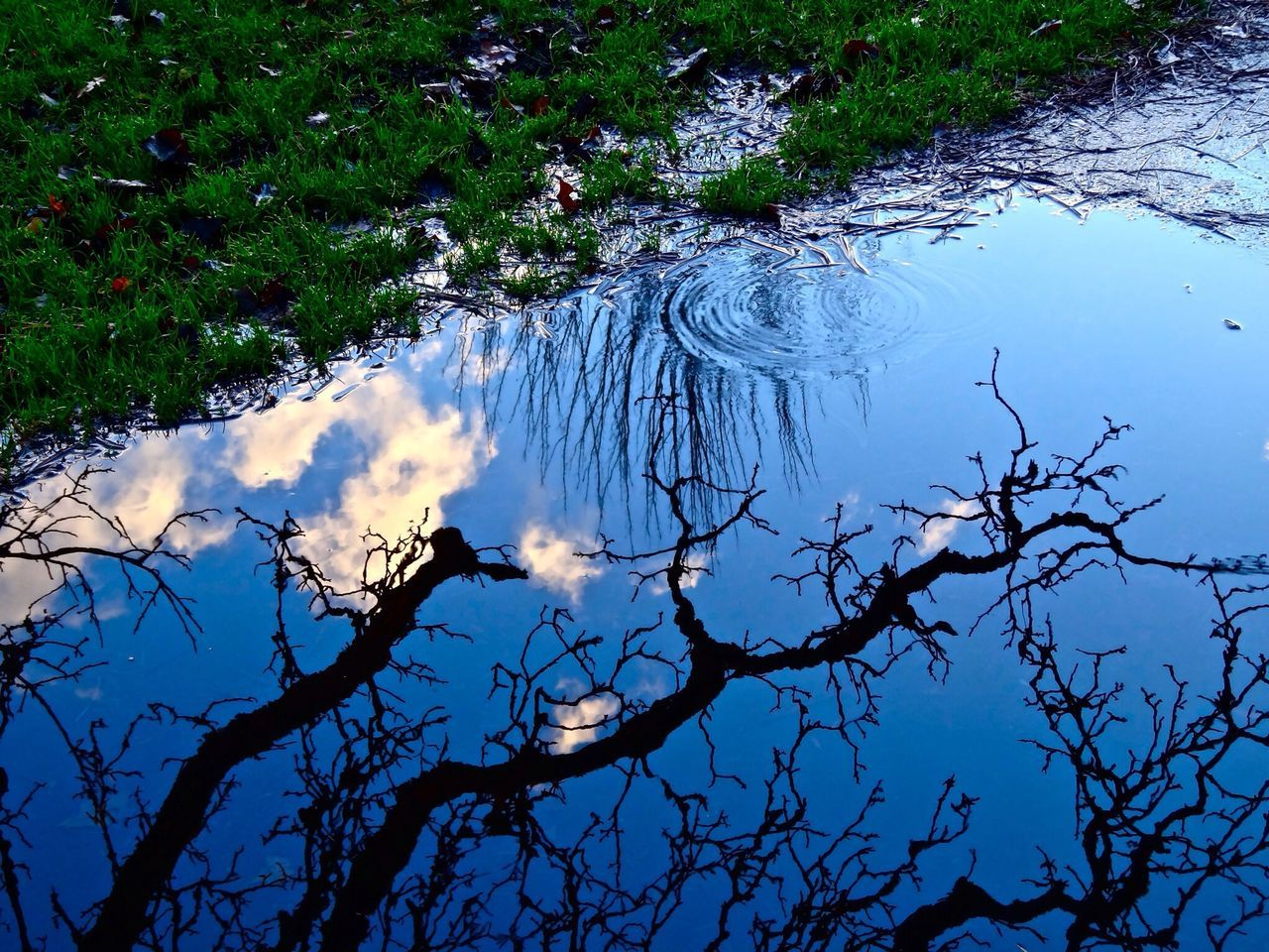 Sky_collection TreePorn Reflection Time To Reflect