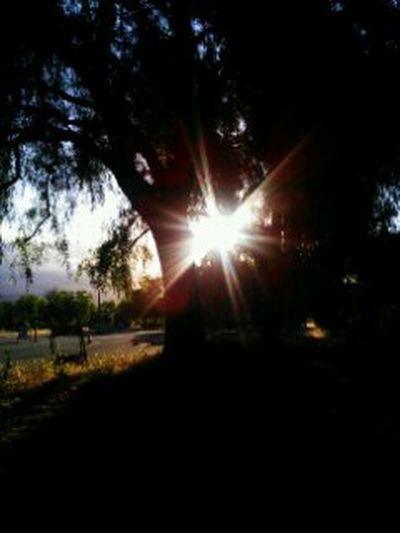 Walking Around Hugging A Tree Enjoying The Sun Living In The Moment Beauty In Nature Bayarea Love San Jose California