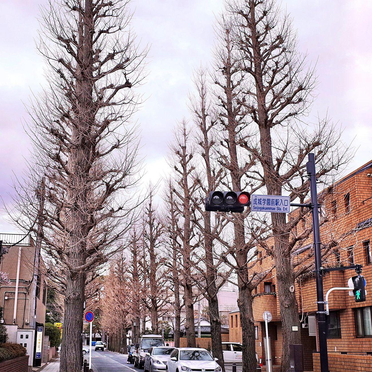 前に来た時はイチョウ並木が見事な黄金色だったのに… Ginkgo Ginkgo Tree Street Photography A Day Of Tokyo