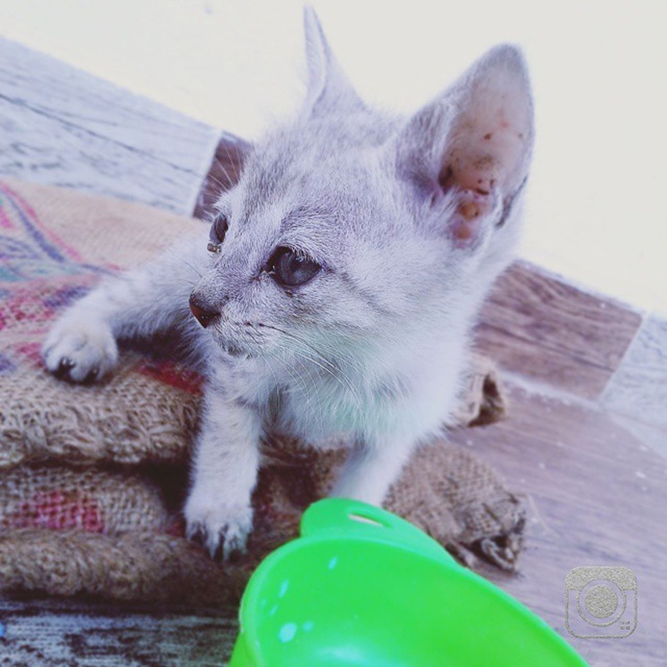 Kitten Cat Cute Pet Love Green Childhood Love Moment Memories Crazy Followgram Followme Followed Life Insta Photograph Photography