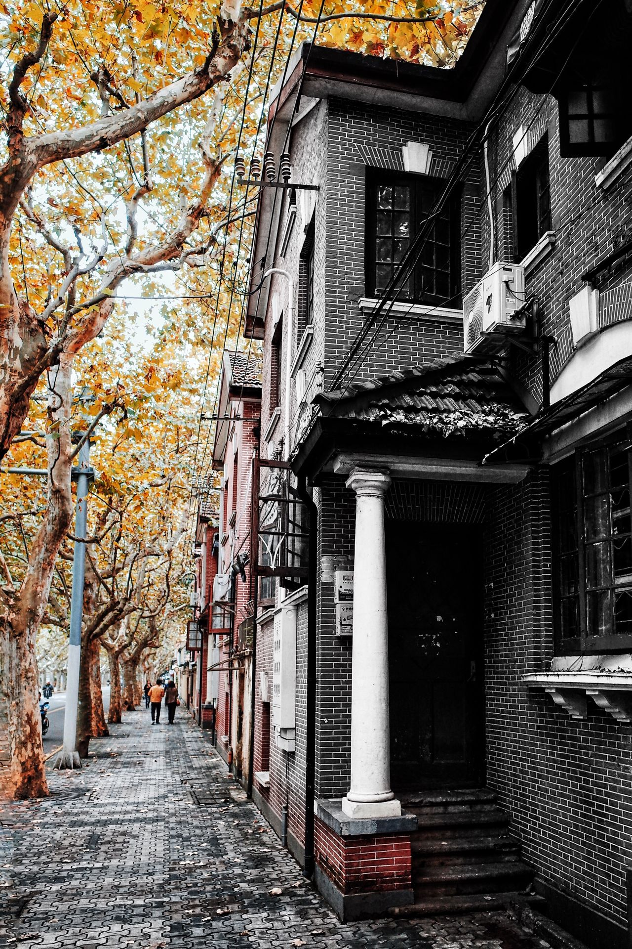 Autumn street My Street Photography From My Point Of View Shanghai Shanghai Streets Shanghai Photography Taking Photos Architecture Building Exterior Tree Autumn Trees Shanghai Autumn The Way Forward