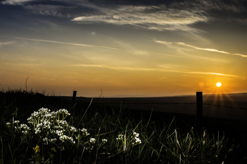Moorland Sunset Beauty In Nature Flower Landscape Nature No People Outdoors Plant Scenics Sky Sunset Tranquil Scene Tranquility