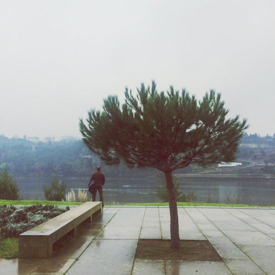 Just another day by the Douro Douroriver Portugal Porto Tree Nature Tranquility Day Outdoors One Person Shades Of Winter