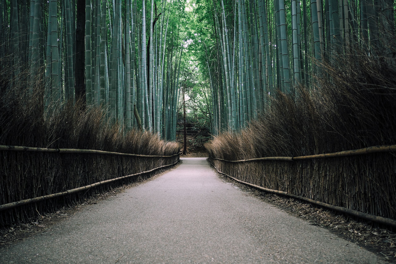 Arashiyama Bamboo Forest in Kyoto, Japan Arashiyama Bamboo Bamboo - Plant Bamboo Forest Bamboo Grove Beauty In Nature Day Footpath Forest Green Color Growth Horizontal International Landmark Kyoto Kyoto, Japan Nature No People Outdoors The Way Forward Tourist Attraction  Tranquility Travel Destinations Tree