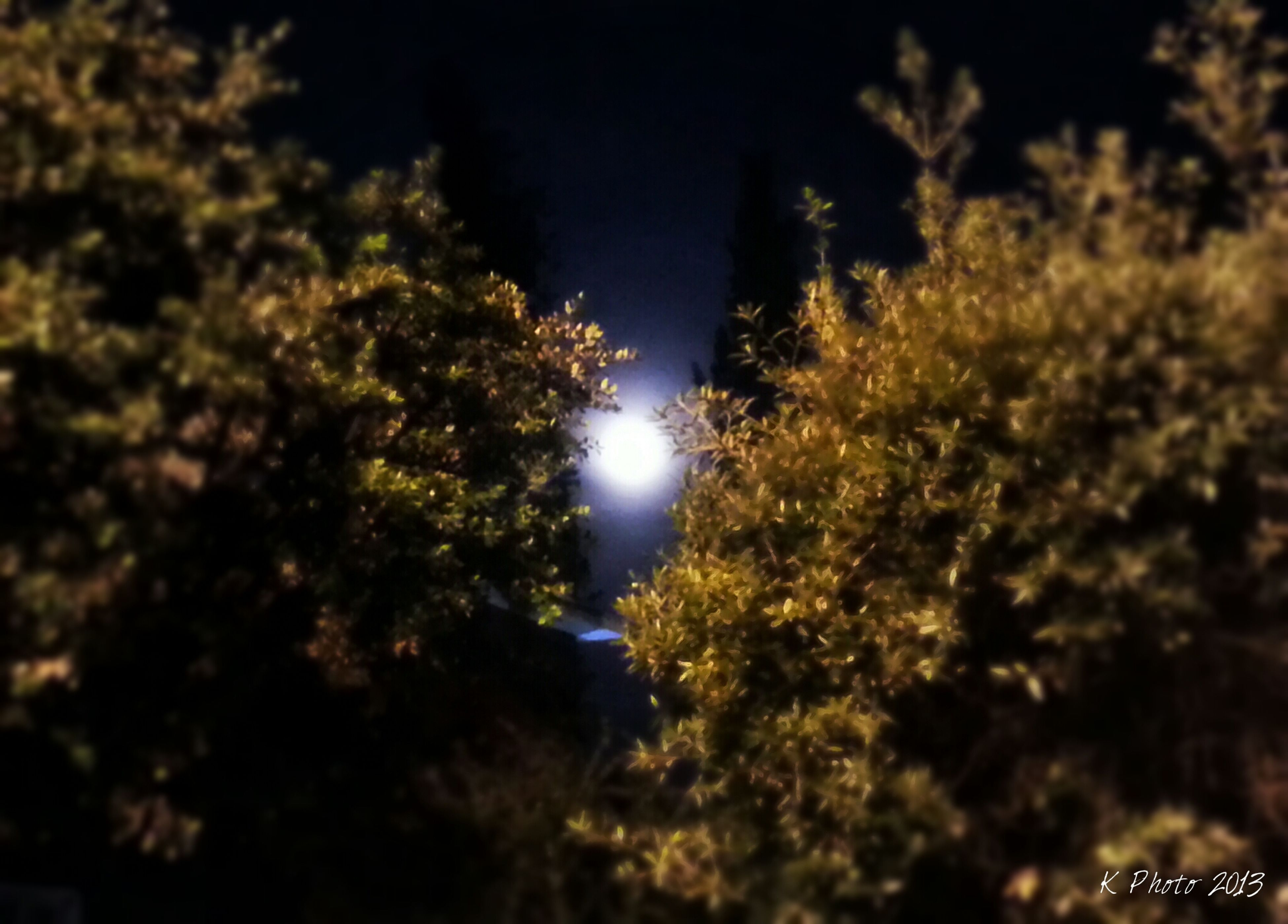 tree, low angle view, growth, nature, tranquility, beauty in nature, sky, night, branch, lens flare, tranquil scene, scenics, sun, outdoors, sunlight, no people, moon, idyllic, forest