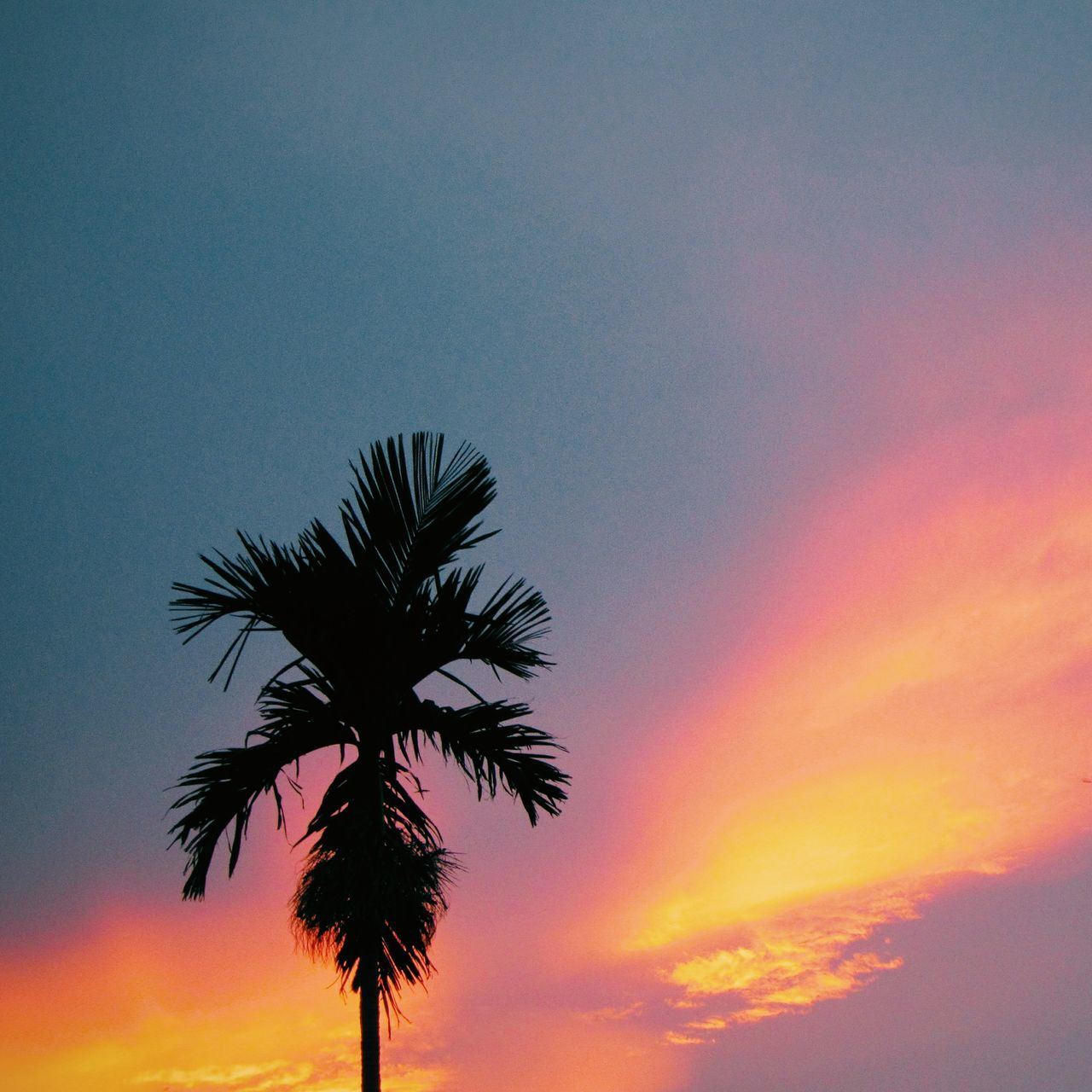 Low Angle View Of Silhouette Palm Tree Against Dramatic Sky