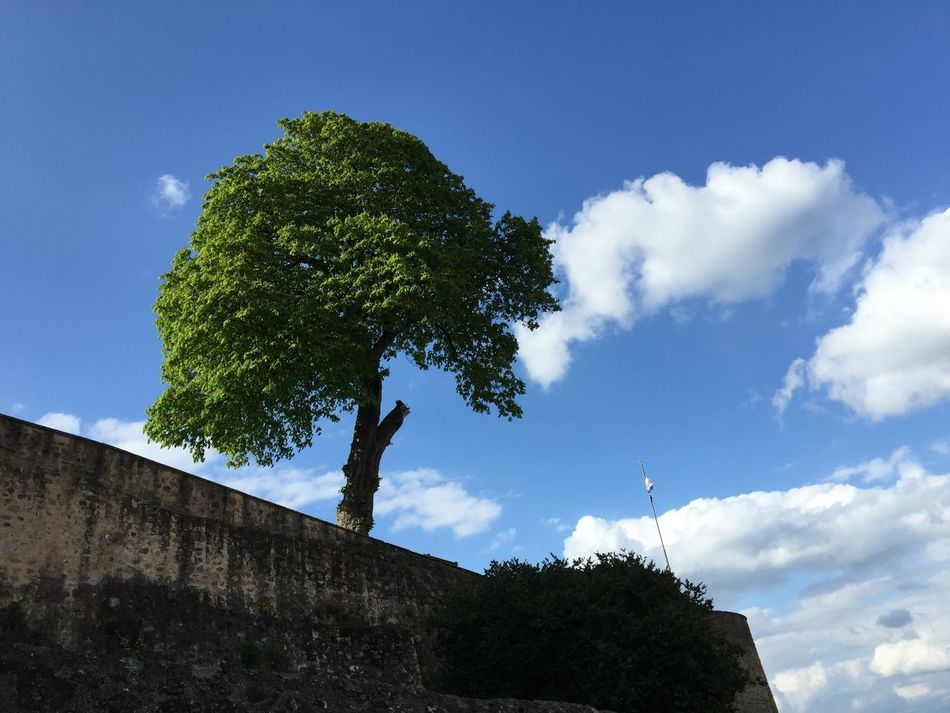 Beauty In Nature Blue Cloud Cloud - Sky Cloudy Day Green Color Growth High Section Low Angle View Nature No People Outdoors Plant Scenics Sky Sunny Tranquil Scene Tranquility Tree