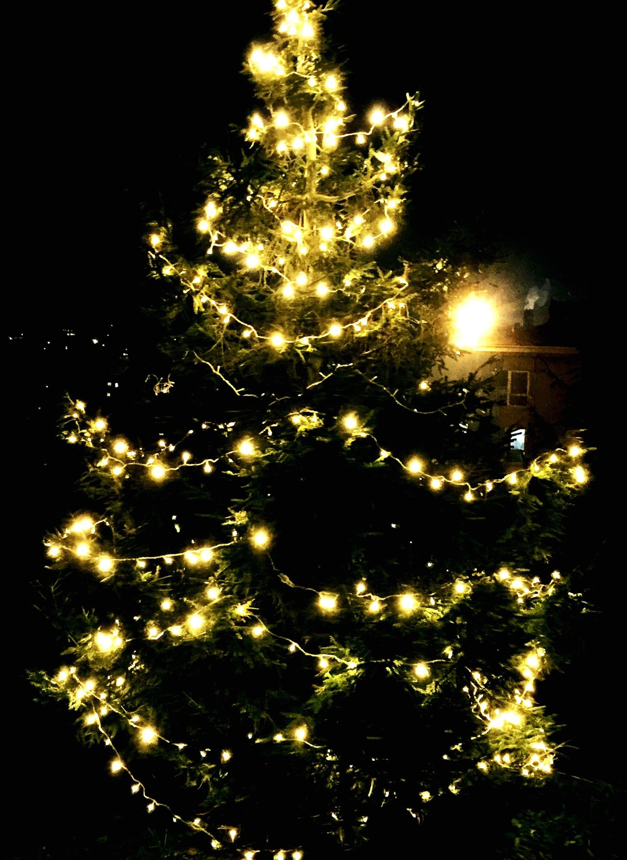 Christmas Tree Christmas Lights Christmastree Christmas Around The World MerryChristmas Merry Christmas Merryxmas IPhoneography Mobilephotography Mobile Photography