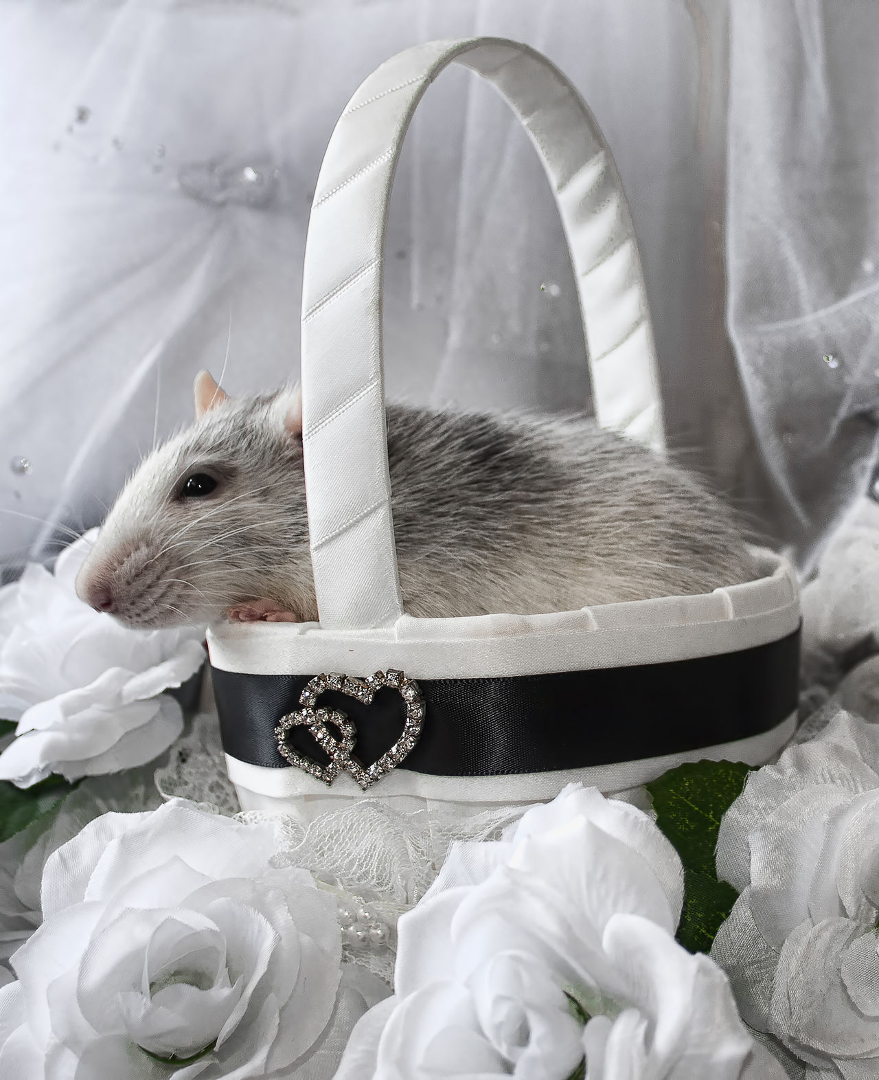Wedding rat Basket Black And White Domestic Animals Pet Rat Rodent Romantic Wedding