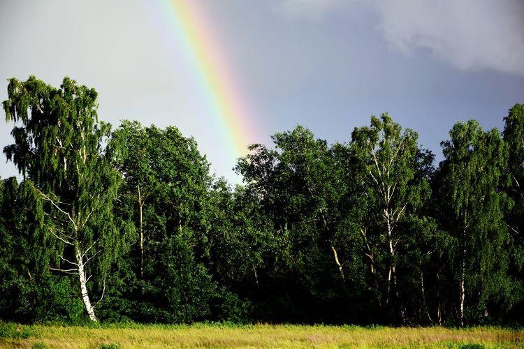 Tree Clouds Nature Raimbowcolors Rainbow Storm