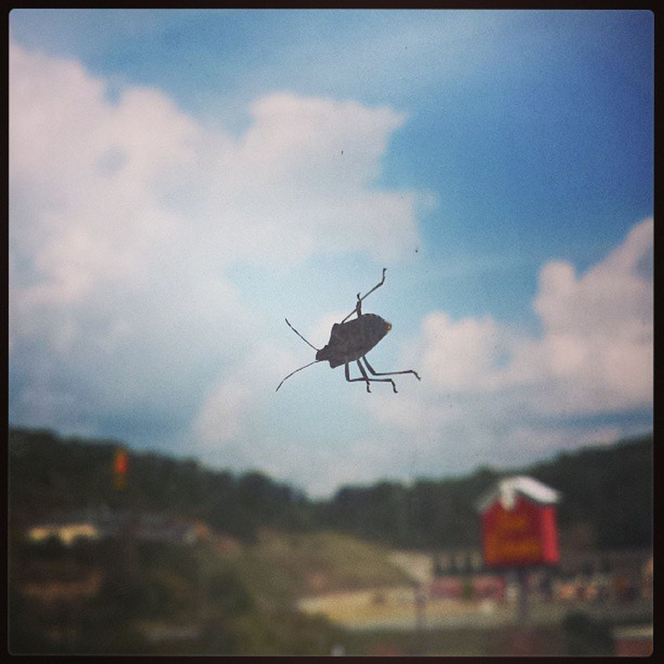 Critters Hotelroomview Stinkbug