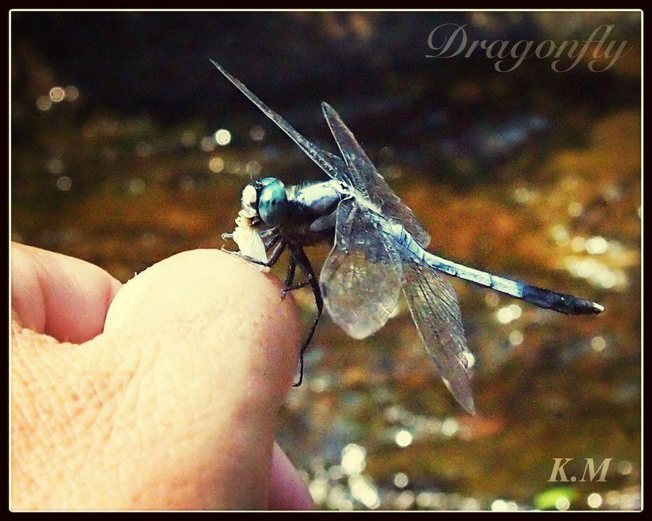 食事中 First Eyeem Photo Tadaa Family Dragonfly 勝トンボ