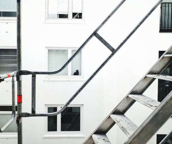 EyeEm Selects Steps And Staircases Staircase Architecture Steps Built Structure Building Exterior No People Day Spiral Staircase Outdoors Katze Kat