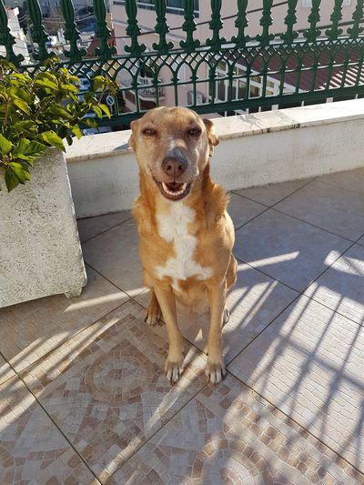 Dogs Of EyeEm Dog❤ Dogslife Dogstyle Domestic Animals Dog Lover