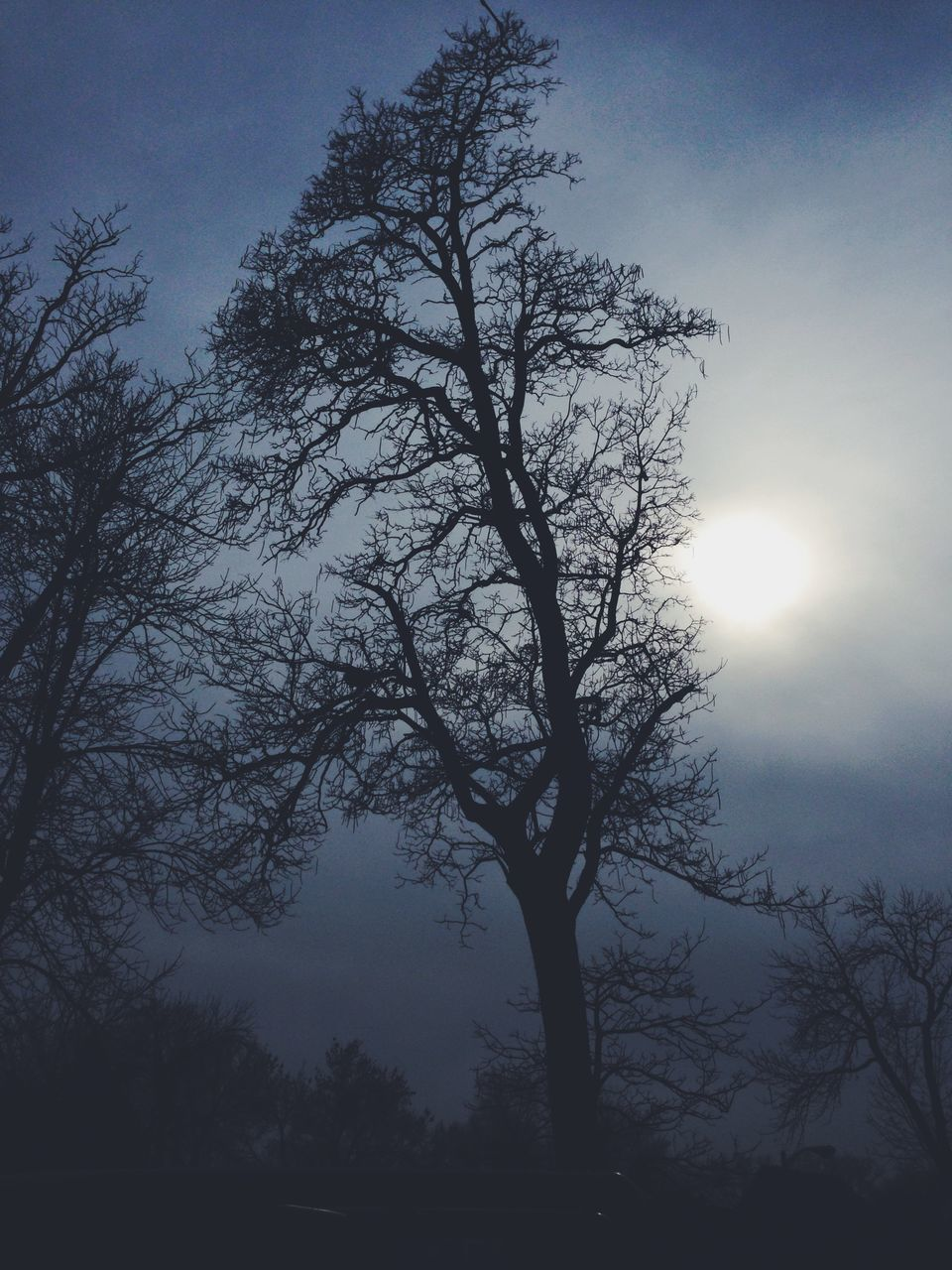 tree, nature, beauty in nature, tranquility, bare tree, landscape, sun, branch, silhouette, scenics, outdoors, sky, no people, day