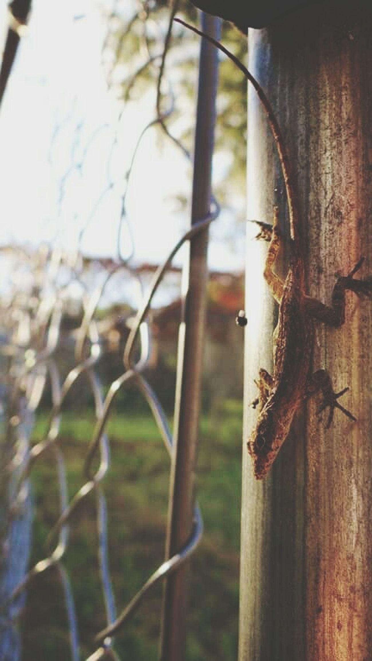 Eyeem Lizards Chainlink Fence Sunlight