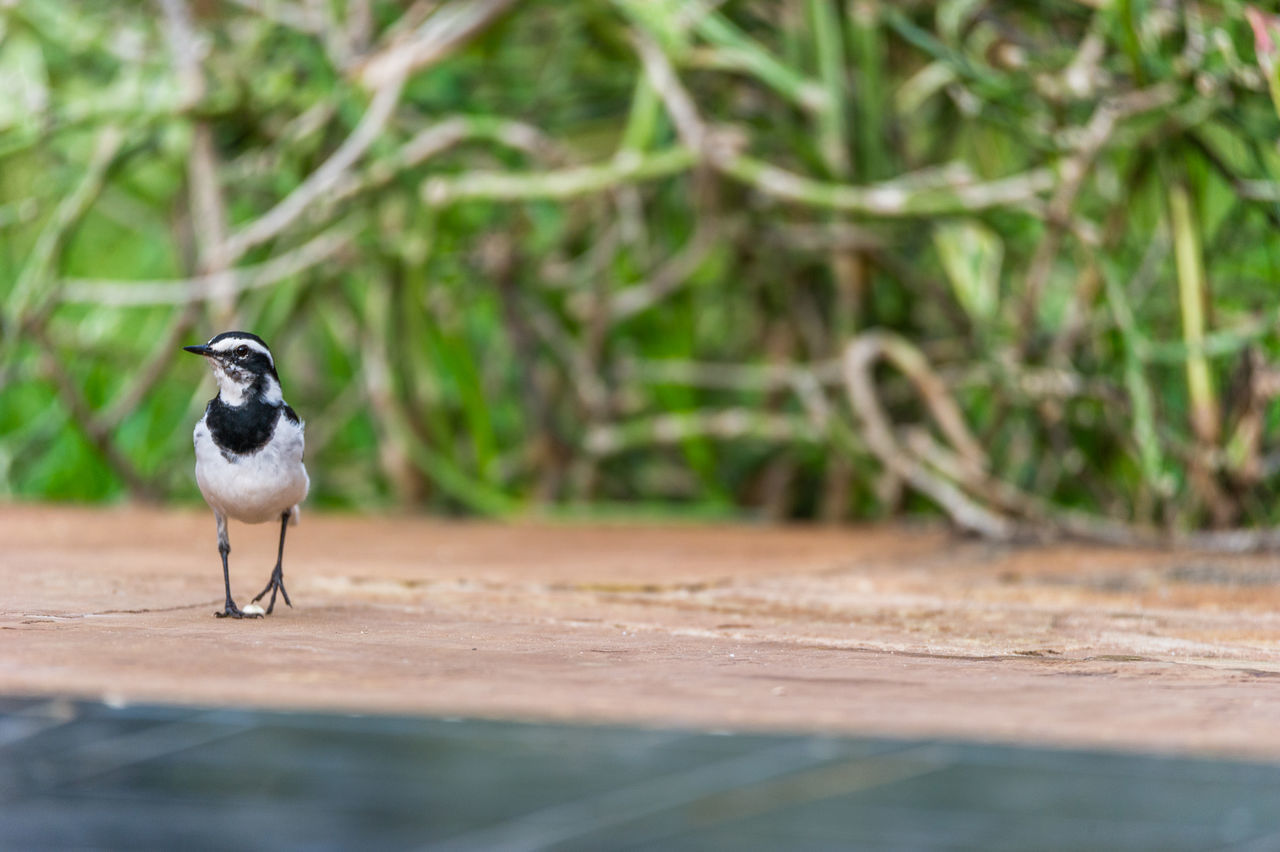 Surface Level Of Bird Perching At Poolside Against Plants