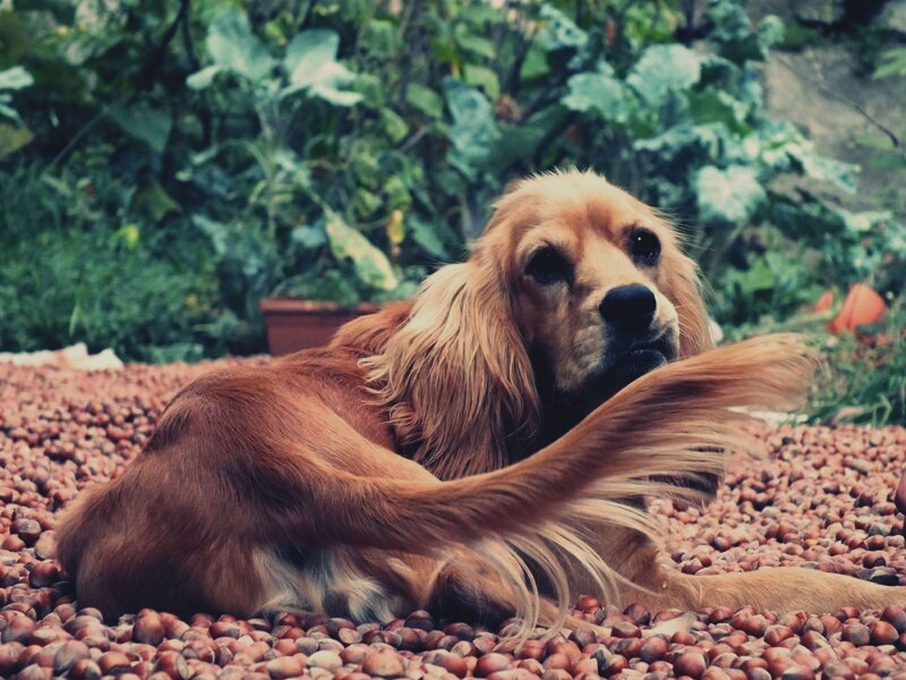 Animal Themes One Animal Relaxation Dog Mammal Domestic Animals Pets Outdoors Portrait Close-up No People Nature Day Nut Nuts Blacksea EyeEmNewHere