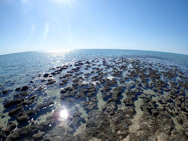 Australia Bluesky EyeEm Gallery EyeEm Nature Lover EyeEmBestPics EyeEmbestshots Light Nature O2 Ocean Oxygen Sea Sky Stromatolites Sun Sunlight Sunreflection Water WesternAustralia Landscapes With WhiteWall
