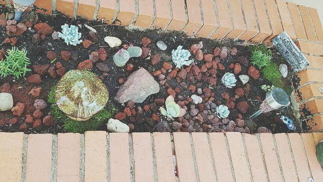 My Cactus Garden Cactusporn Cactus Garden Garden Photography