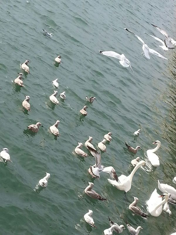 Gulls and swans in Sheepshead Bay Sheepshead Bay Brooklyn Nyc Taking Photos