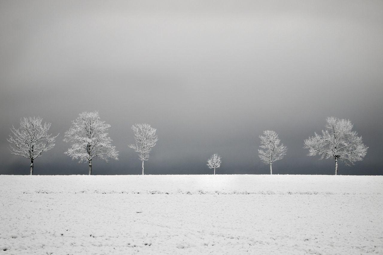 Blackandwhite Trees EyeEm Nature Lover Nature