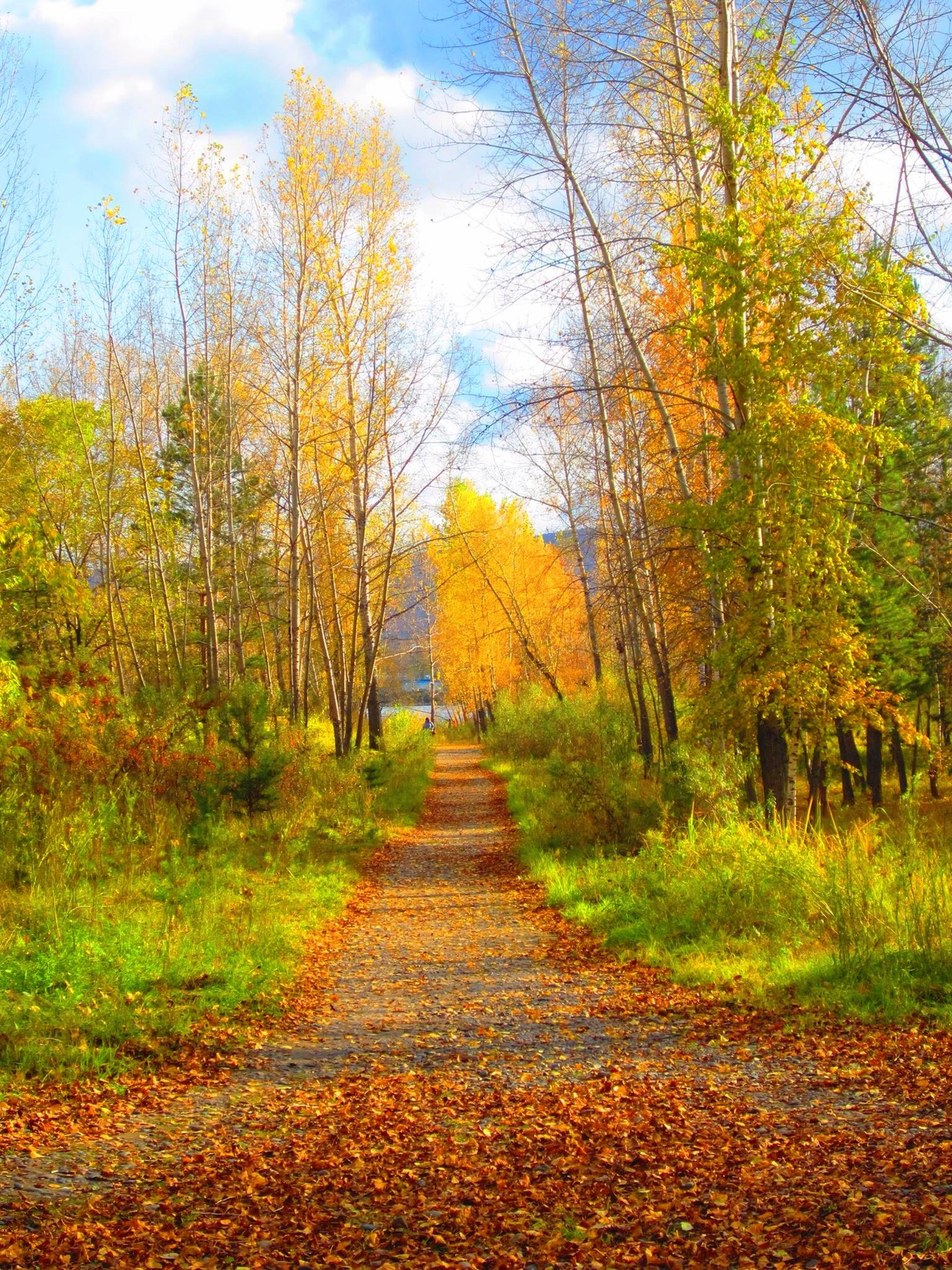 the way forward, tree, autumn, tranquility, diminishing perspective, sky, change, tranquil scene, nature, growth, vanishing point, beauty in nature, scenics, dirt road, landscape, grass, footpath, season, green color, day