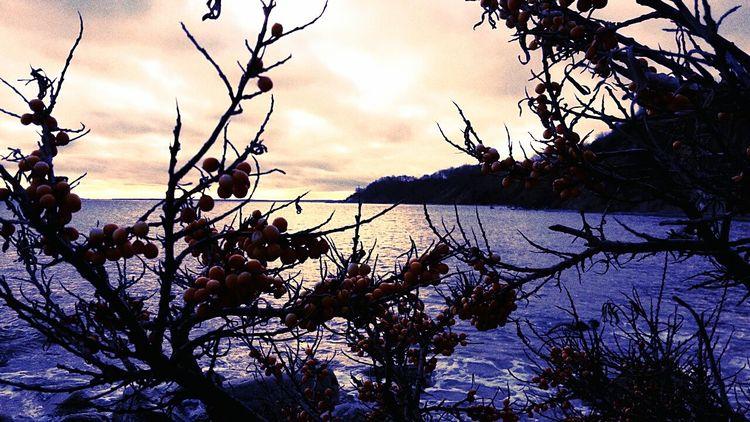 Kap Arkona Vitt Sanddorn Sea Buckthorn Colorful Sky Clouds Rügen My Favorite Place Miles Away