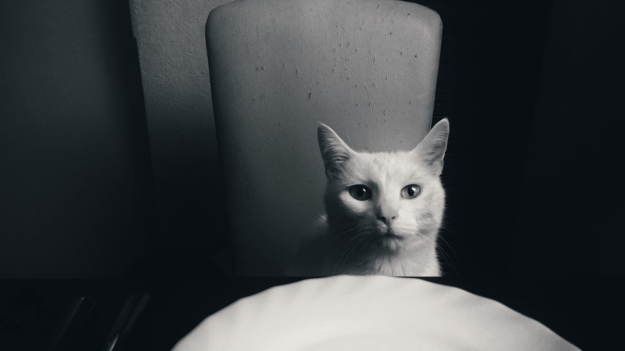 Fresh On Eyeem  Lumiaphotography Mobile Photography Lumia1520 Nokia  Cats Of EyeEm Catoftheday Cat♡ Miss Sophie Meal Empty Plate Feed Me Princess Monochrome Blackandwhite Chair Sitting Tables And Chairs Monochrome Photograhy
