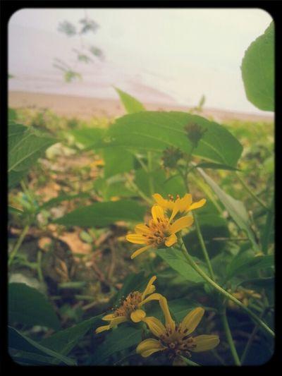 Hello World Good Morning EyeEm EyeEm Nature Lover Fresh From Moracay Beach
