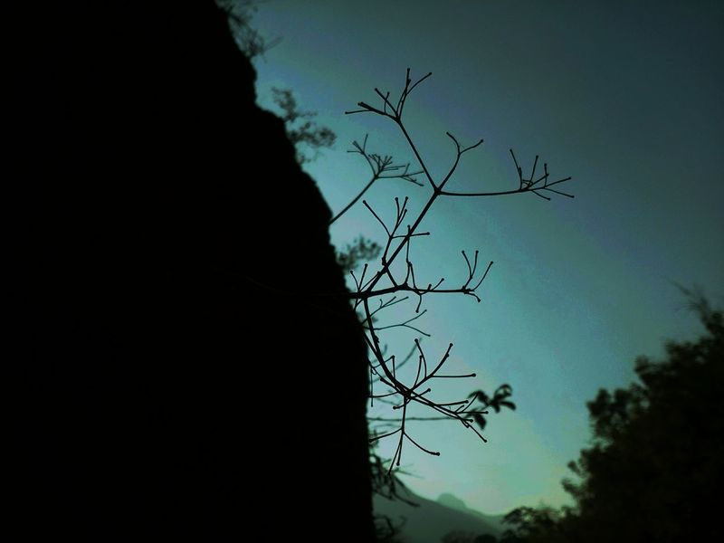 Silhouette Sky Tree Branch No People Outdoors Close-up Nature Dayvsnight Mobilephotography Sticks Dried Plant Tranquility Beforenight Aftersunset Wandering Freshness Fruzzi Bluesky Blue Blue Hour The Great Outdoors - 2017 EyeEm Awards