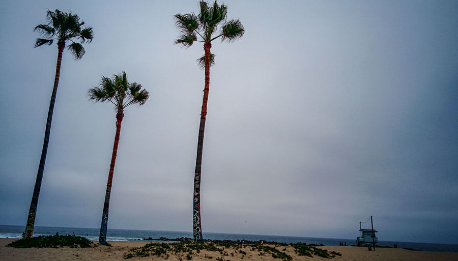 Tree friends and the sea Ocean Mist Misty Morning Beach Venice Palm Tree Lonely Silent Moment Alone Time Sand Beachguard Sea Horizon