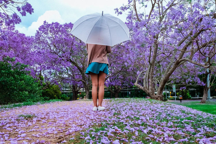 Beautiful Woman Beauty In Nature Day Flower Fragility Freshness Full Length Growth Leisure Activity Lifestyles Nature One Person One Young Woman Only Outdoors Purple Real People Sky Springtime Standing Tree Under Walking Women Young Adult Young Women