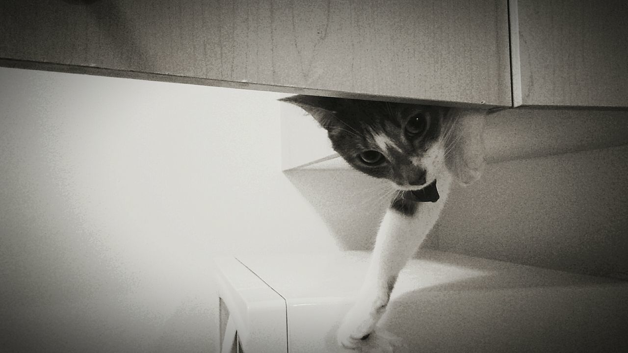 Interior Style silly photo :) My Kitchen 😊 She Was Hiding. Animals FreshonEyeem Adapted To The City Minimalist Architecture