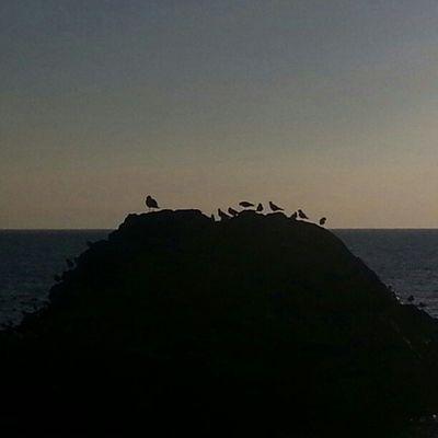 Ocells Lloretdemar Inscostabrava Catalunyaexperiencie Igersgirona sensefiltres