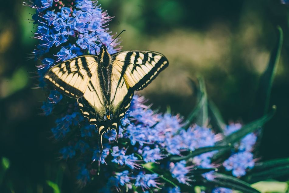 Textures In Nature Insect One Animal Butterfly - Insect Animal Themes Animals In The Wild Flower Nature Fragility Swallowtail Butterfly Focus On Foreground Close-up Beauty In Nature Freshness Plant Animal Wildlife Growth Day Outdoors Pollination Flower Head