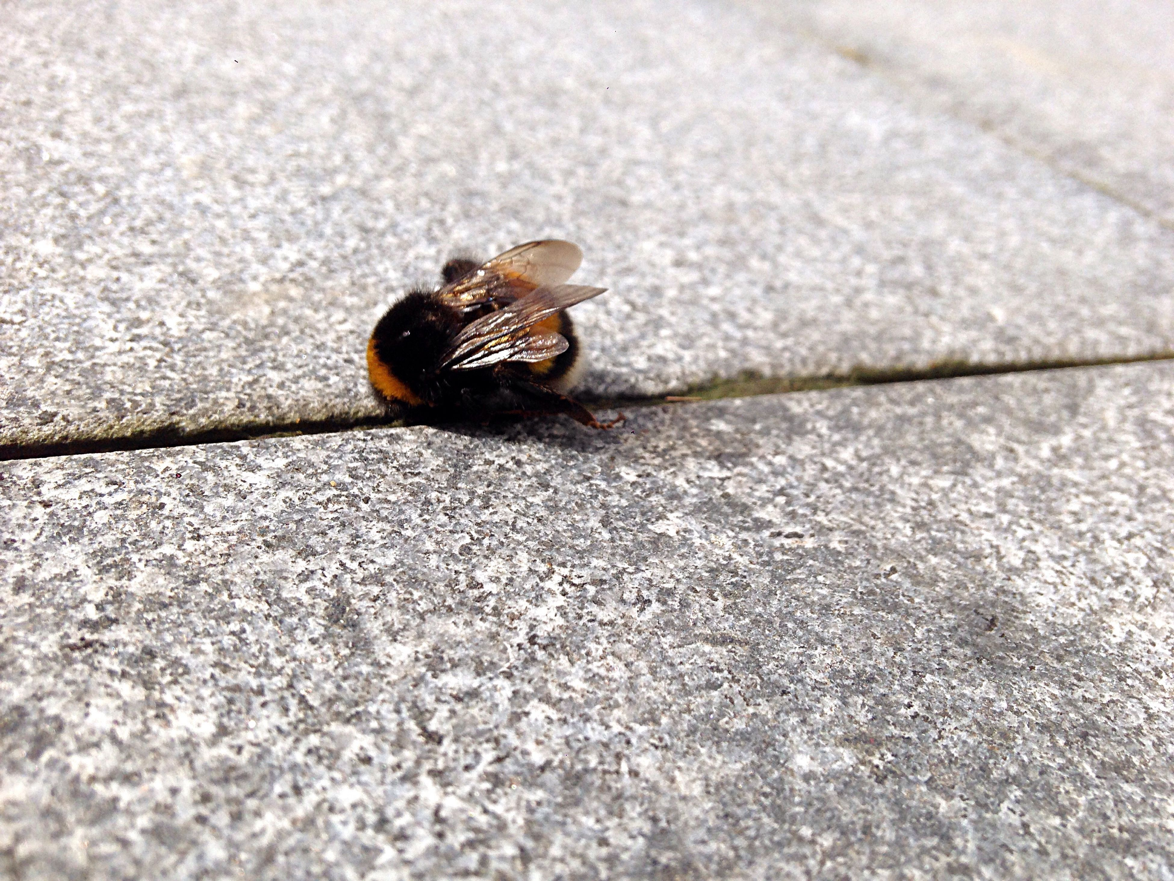 snail, one animal, animal themes, animals in the wild, wildlife, shell, gastropod, sunlight, nature, outdoors, no people, animal wildlife, close-up, day, fragility, insect, slimy