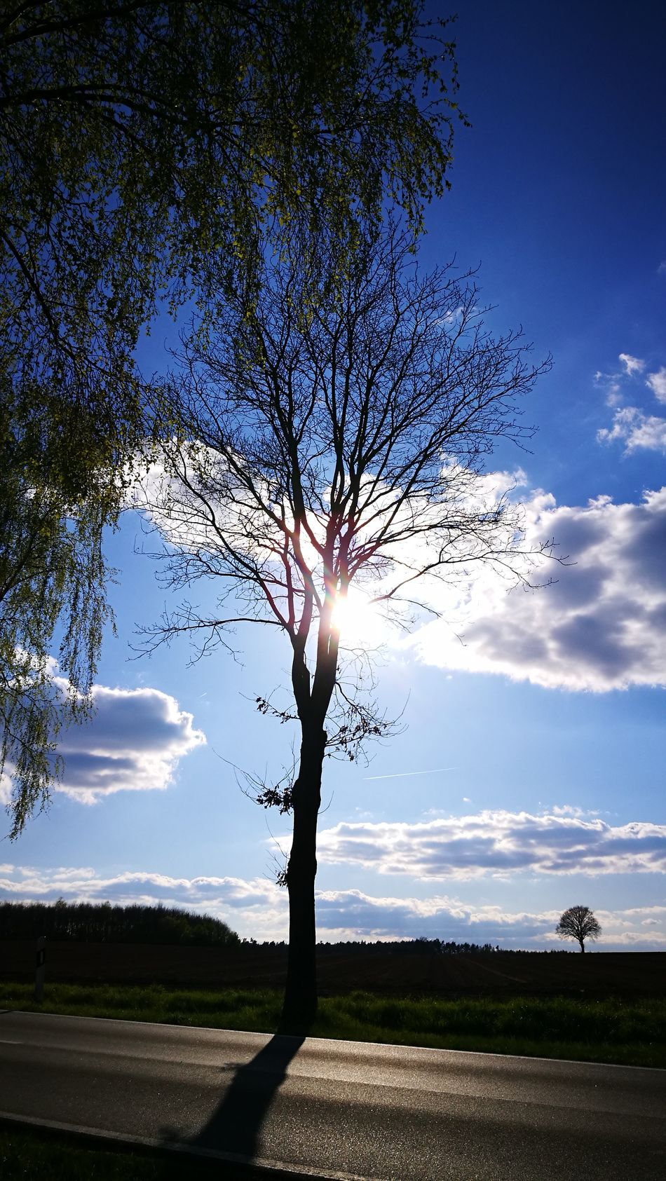 Sunny day in Germany.... Tree Single Tree Tree Trunk Outdoors Landscape Sky Field Nature Beauty In Nature Silhouette Cloud - Sky Scenics Rural Scene No People Day Tree Area Beauty In Nature Originalpicture GetbetterwithAlex